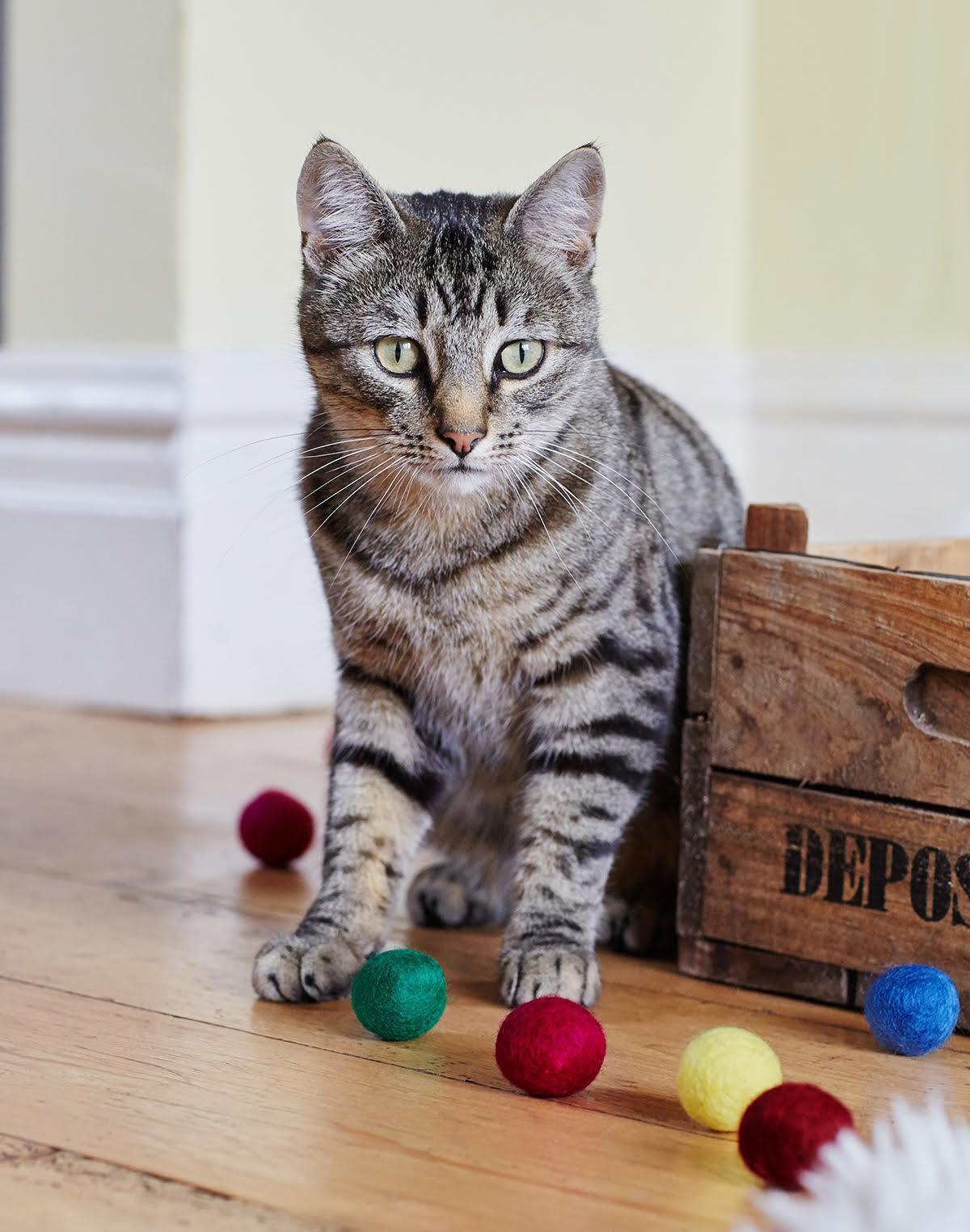felt ball cat toys bright and colourful natural felt. Black Bedroom Furniture Sets. Home Design Ideas